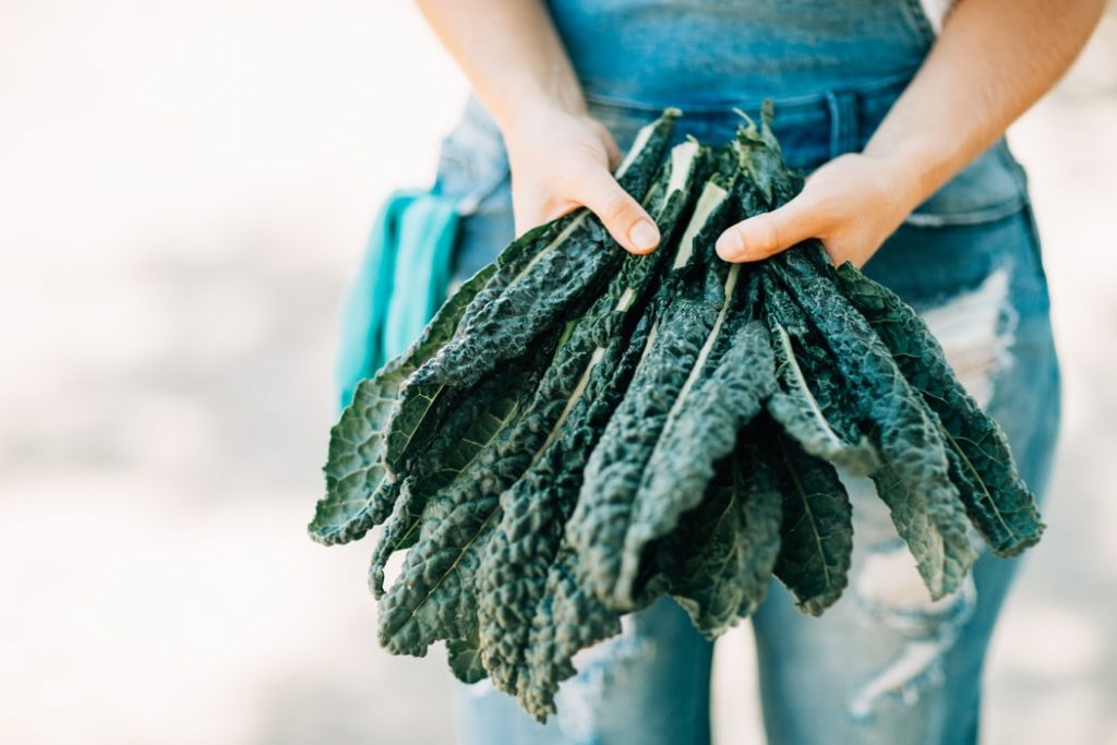 4 Health Benefits of Kale You Need To Know About by gymnasium post (GP) (gymnasiumpost.com)